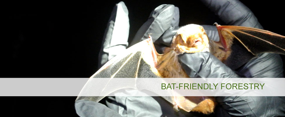 Bat-Friendly Forestry