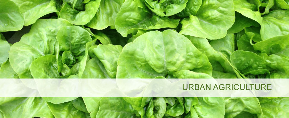 Urban Agriculture & Forestry