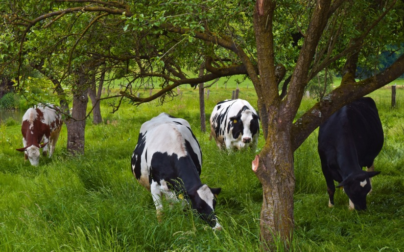 Agroforestry 101: An Introduction to Integrated Agricultural Management Systems