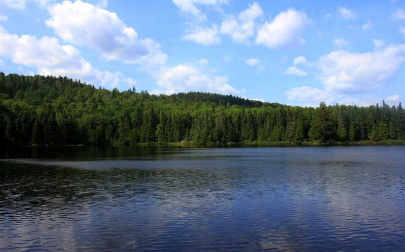 5-Year Review of Forest Action Plans and Effective Water Quality Protections
