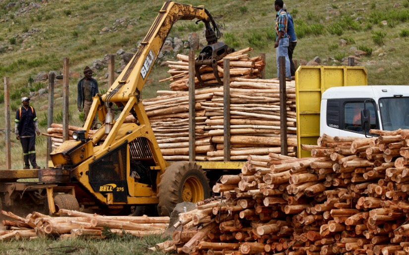 Impacts of Policies to Eliminate Illegal Timber Trade