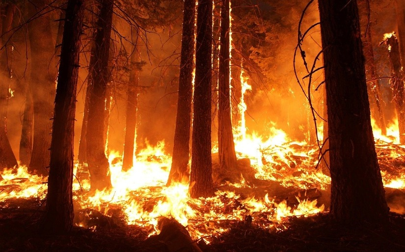 Join Dovetail Partners at the Fire in Minnesota Ecosystems Workshop