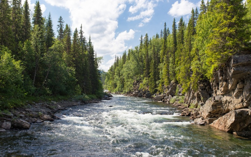 Forests of the United States: Understanding Trends and Challenges