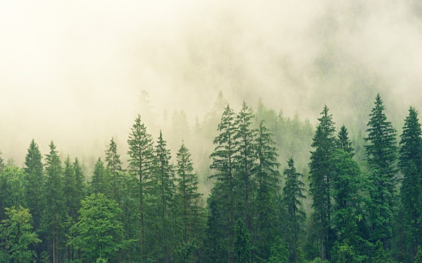 Managing Forests for Carbon Mitigation