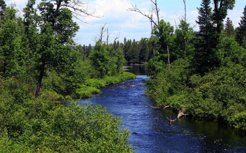 Maximizing the Environmental and Economic Benefits of a Million Acres of Forestation in Minnesota
