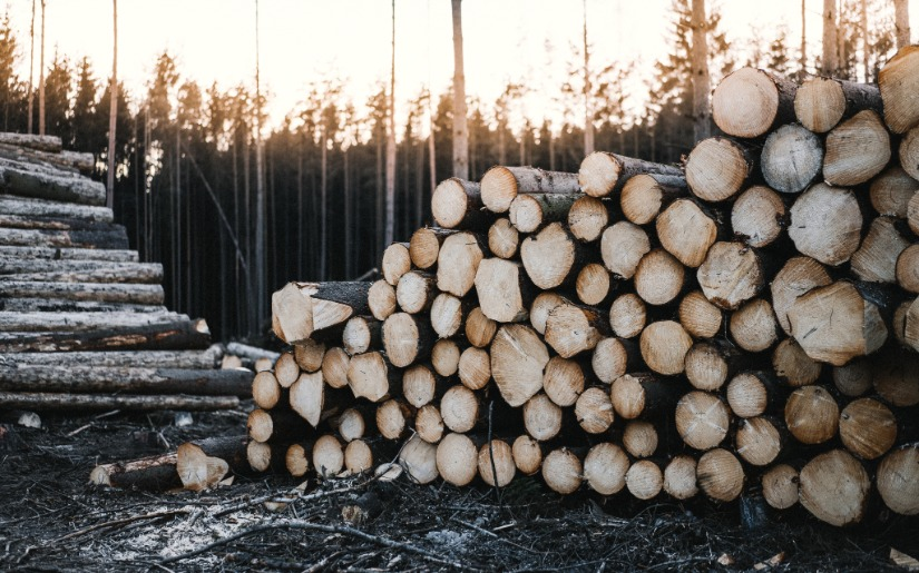 Global Competition: An Opportunity for our Domestic Wood Products Industry