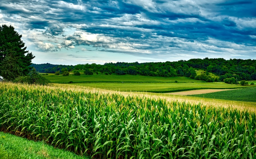 Biomass Energy - From Farms to Forests an Emerging Opportunity for Rural America