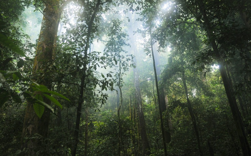 Forest Certification in the Tropics: Is the glass half full or half empty?