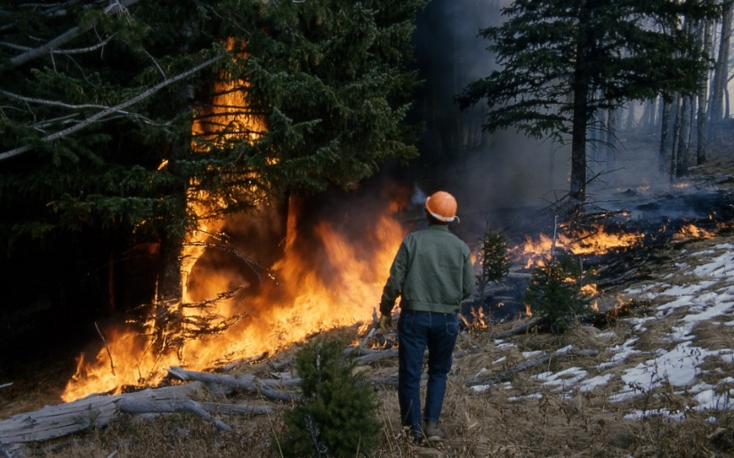 Dovetail Partners hosts webinar: Tips for Backyard Wildfire Resiliency