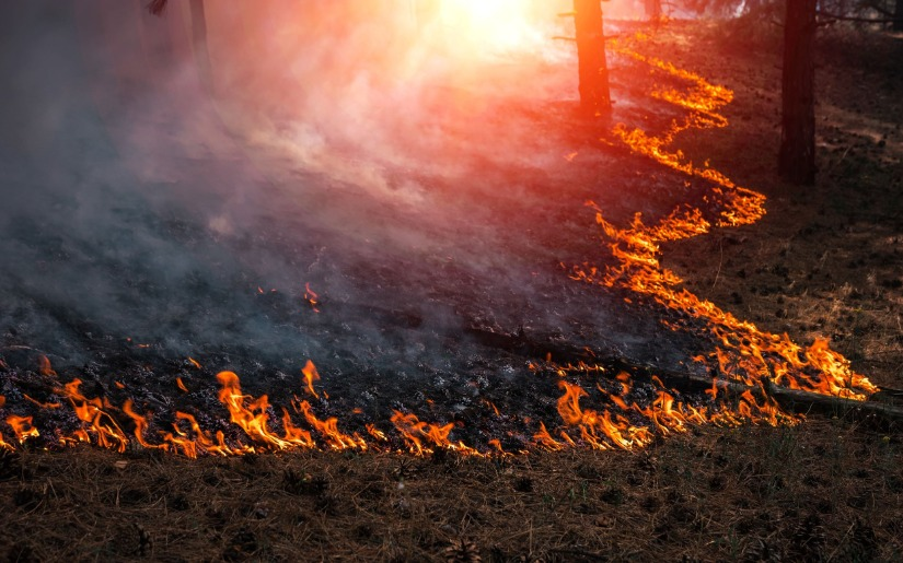 Virtual field tour explores the role of prescribed fire in the Arrowhead region